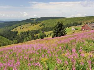 Správa KRNAP zažalovala jednatele Klínových Bud kvůli vyhrožování ochráncům přírody