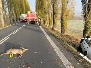 U silnic v hradeckém kraji budou nová zradidla. Ty mají zabránit srážkám aut se zvěří