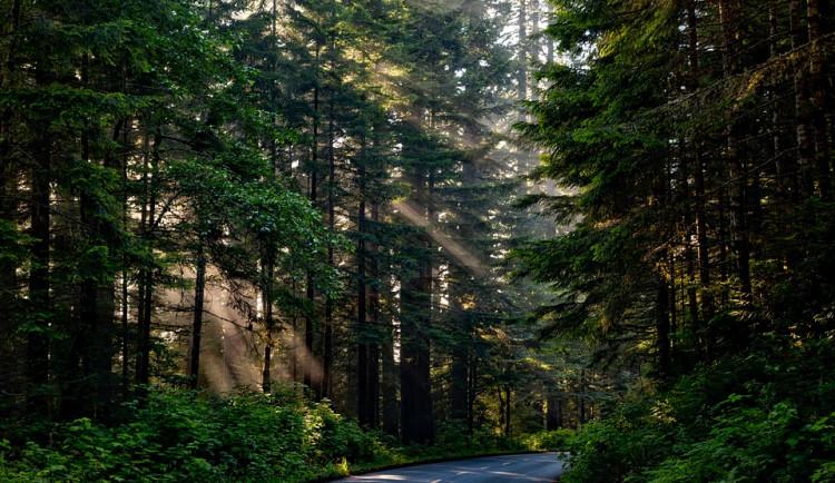 Cizinec se ztratil vlese, kde vydržel bez pití a jídla celý víkend. Policie ho našla na poslední chvíli