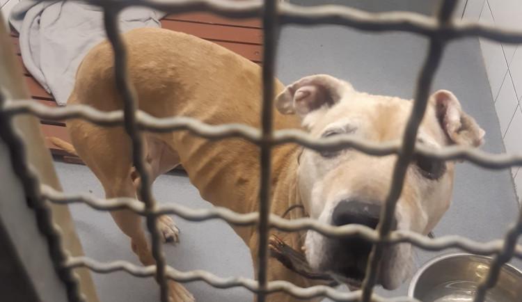 Nechal psa tři týdny zavřeného v pronajatém bytě, podvyživeného mezi výkaly ho našla až majitelka bytu