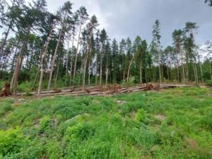 Návštěvníci lesů by měli být obezřetní. Stromy poničené bouří v okolí Dvora Králové mohou stále padat