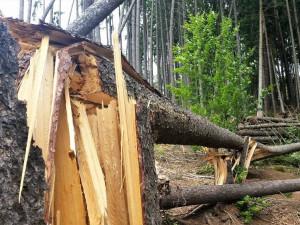 Odklízení poničeného dřeva v Krkonoších komplikuje počasí. Práce potrvají minimálně do zimy