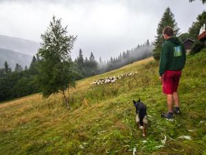 Z ajťáka farmářem. Jeroen Aerts odešel z kanceláře, teď pase ovce v Krkonoších