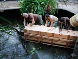 Jak složité je přestěhovat půl tuny těžkého krokodýla? Ze zoo ve Dvoře Králové ho stěhovali kulturisté z posilovny