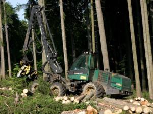 Lesy ČR posunuly termín podání nabídek do tendru za pět miliard korun