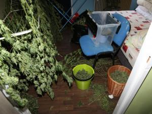 Dealer doma sušil 17 kilogramů trávy. Chtěl ji ochránit pomocí pastí zprken a hřebíků