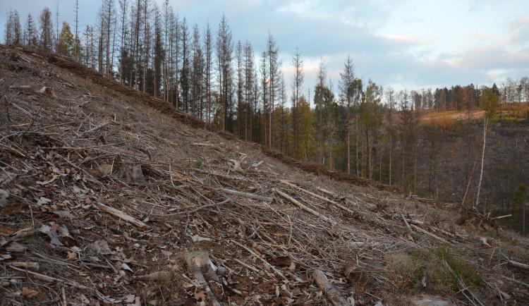Kalamita kůrovce ustupuje, lesníci chystají obnovu zničených lesních cest