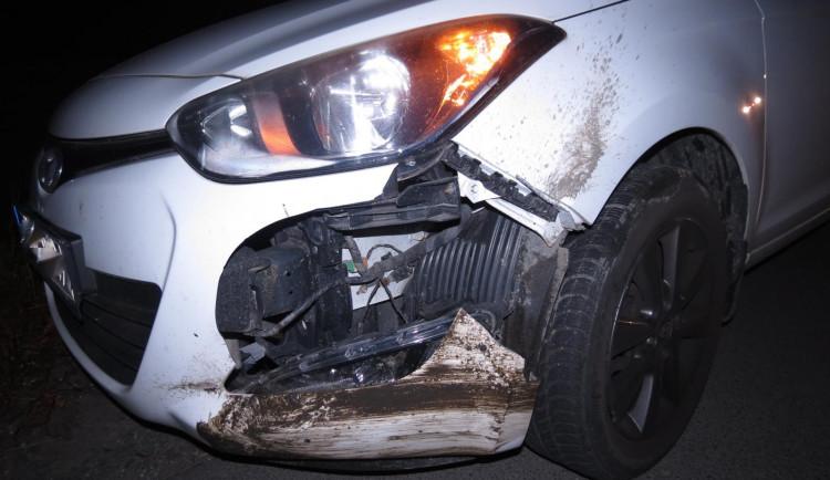 Řidička u Třebechovic pod Orebem srazila klokana. Střet zvíře nepřežilo
