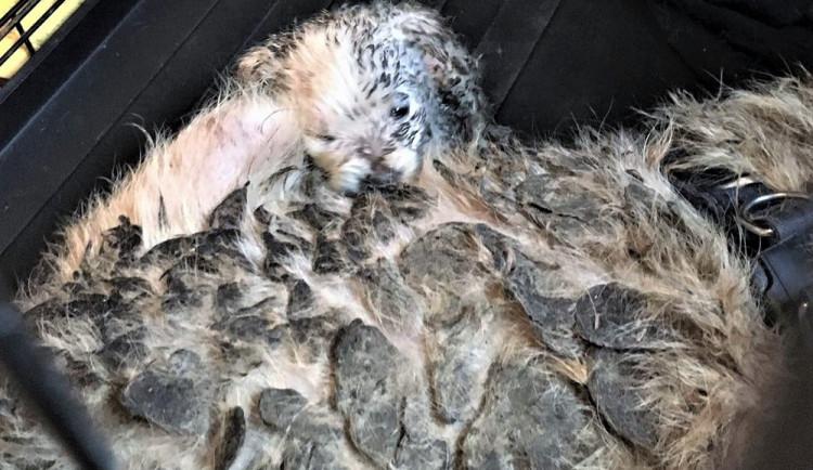 GALERIE: Psi žijící v nevyhovujících podmínkách